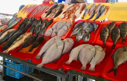 Infinidad de pescados del mar peruano